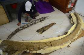 Penemu Fosil Purba di Situs Patiayam Memperoleh Kompensasi