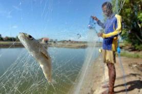 Selain Ikan Laut, Pangandaran Dorong Produktivitas…