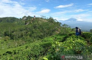 Kulon Progo Benahi Jalan ke Borobudur Highland