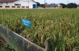 Kaltara Fokus Kembangkan Ekonomi Kerakyatan Lewat Produk Pertanian Lokal
