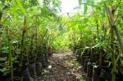 3.000 Bibit Bambu Bernilai Ekonomis akan Ditanam di DAS Ayung Bali