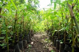 3.000 Bibit Bambu Bernilai Ekonomis akan Ditanam di…