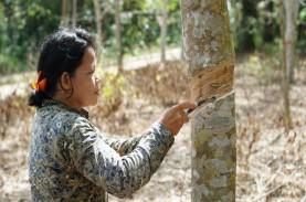 Jelajah Komoditas Sumatra: Petani Karet Semringah…