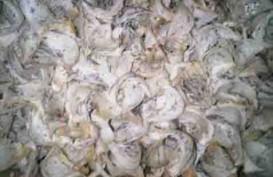 Harapan Petani Sarang Burung Walet Ekspor ke Luar Negeri