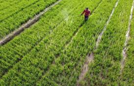 Produksi Beras di Kabupaten Cirebon Selalu Surplus