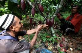 Janji 100 Persen Kakao Lokal, Cargill-Nestlé Gandeng 2.000 Petani