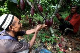 Janji 100 Persen Kakao Lokal, Cargill-Nestlé Gandeng…
