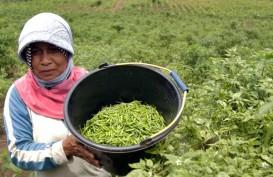 Banyuwangi Siap Jadi Penyangga Cabai Rawit Nasional