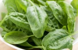 7 Makanan Cegah Anemia yang Rasanya Enak