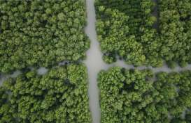 NTB Ditarget Rehabilitasi 56 Hektare Mangrove dalam 2 Bulan