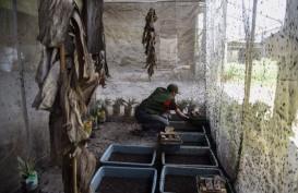 Di Kabupaten Bandung, Maggot Dimanfaatkan Urai Sampah Organik