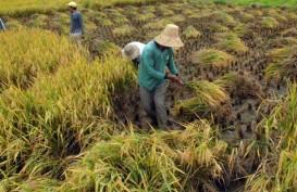 Komisi IV DPR Ingin Tahu Keberhasilan Food Estate di Kalteng