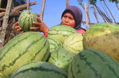 Bengkalis Siapkan Program 1 Desa 1 Penyuluh Pertanian