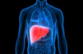 Obat Herbal Ini Dipercaya Bisa Sembuhkan Penyakit Liver
