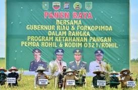 Gubernur Riau Ikut Panen Raya Padi di Rokan Hilir Seluas 350 Hektare