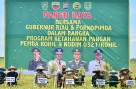 Gubernur Riau Ikut Panen Raya Padi di Rokan Hilir…