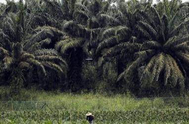 Potensi Pajak Produk Turunan Sawit Kalbar Capai Rp1,5 Triliun Setahun