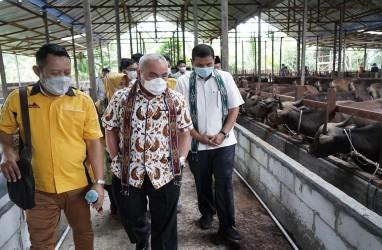 Pertamina Salurkan Rp20,6 Miliar untuk 206 Peternak Sapi di Kaltim