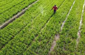 Nilai Tukar Petani & Rata-rata Harga Gabah di Banten Menurun