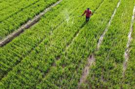 Nilai Tukar Petani & Rata-rata Harga Gabah di Banten…