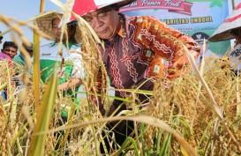 Surplus Beras Sejak 2016, Kalsel Pertahankan Ketahanan Pangan