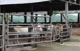 Perusahaan Penggemukan Sapi di Lampung Diminta Tidak Naikkan Harga