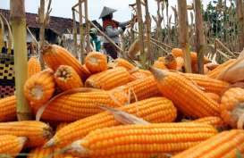 Sumsel Siapkan 278.483 Hektare Lahan Food Estate, ini Daftarnya