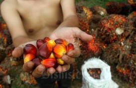 Pekan Ini Harga Sawit Riau Turun Rp120,23 per Kg