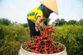 BISI dan Eden Farm Garap Lahan Pertanian Cabai 12.000…