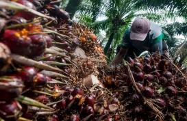 Ekspor Tumbuh, Harga CPO Kembali Menghangat