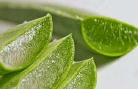 Penting, 5 Suplemen yang Ampuh Meningkatkan Imun Tubuh