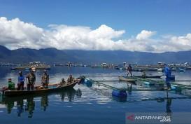 Lima Ton Ikan Nila Milik Petani di Danau Maninjau Mati