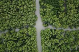 Riau Dapat Kuota 15.000 Hektare Penanaman Mangrove…