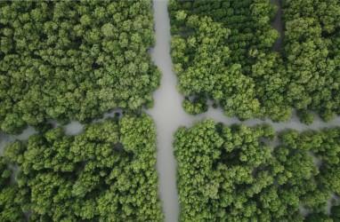 Riau Dapat Kuota 15.000 Hektare Penanaman Mangrove dari Kementerian LHK