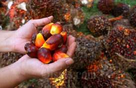 Triputra Agro Persada (TAPG) Listing Hari Ini di Bursa Efek Indonesia