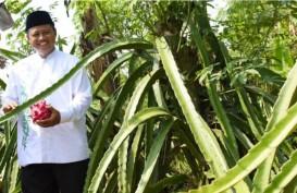 Manfaatkan Teknologi, Petani di Jabar Sukses Menanam Buah Naga