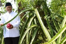 Manfaatkan Teknologi, Petani di Jabar Sukses Menanam…
