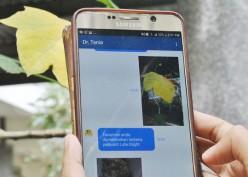 Startup Ini Manfaatkan AI Bantu Petani Deteksi Penyakit Tanaman