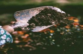 5 Cara Memanfaatkan Ampas Kopi untuk Tanaman