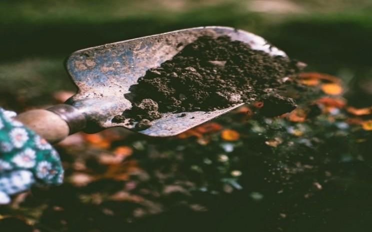 Ampas kopi untuk tanaman
