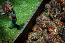 Harga TBS Sawit Riau Kini Capai Rp2.358 per Kilogram