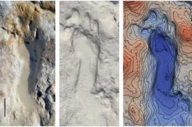 Ahli Temukan Fosil Jejak Kaki Anak-anak Purba di Pantai…