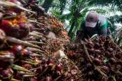 Perkebunan Kelapa Sawit Rakyat, Gapki Sumsel Dorong Perluasan Replanting