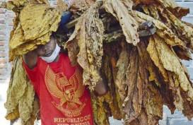 PEMULIHAN EKONOMI NASIONAL : Lombok Timur Jadi Kawasan Industri Hasil Tembakau