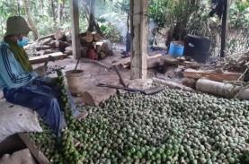 Berkah Ramadan untuk Petani Kolang-kaling di Purwakarta…