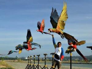 Ngabuburit Bersama Komunitas Free Fly Burung Macaw