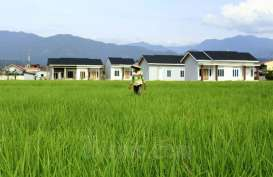 16 Persen Sawah di Padang Menghilang dalam 5 Tahun Terakhir