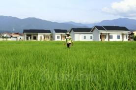 16 Persen Sawah di Padang Menghilang dalam 5 Tahun…