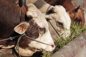 Pembelian Peternakan Sapi di Belgia Tak Hilangkan…