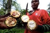 Produktivitas Lahan Kakao dan Kopi Bali Masih Rendah